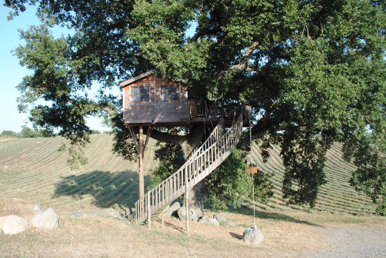 La casa sull 39 albero idea arredo - Casa sull albero airbnb ...